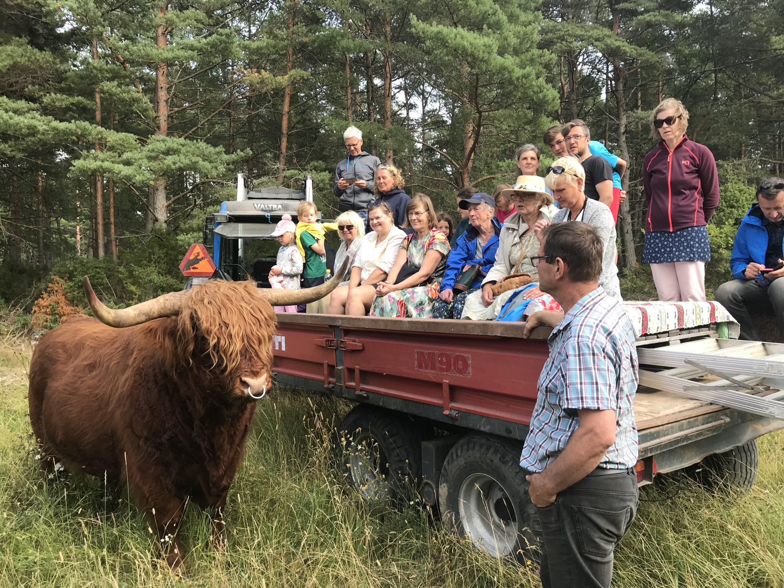 """21. Jurmo Highland Cattle<h5 style=""""margin-bottom: 0px; font-weight: 500; line-height: 18px;""""><span style=""""color: #fff;"""">Matservering och fika vid Kafé Kvarnen. Hälsa på djuren och åk en traktortur.</span></h5>"""
